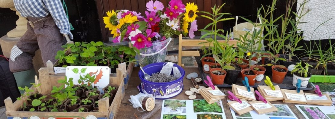 Conwy bee seeds stall
