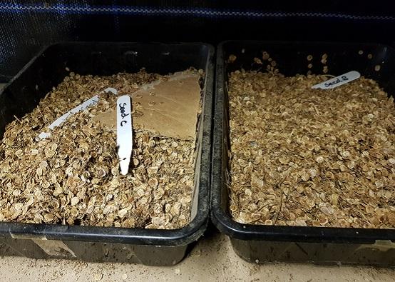 Seed saving think piece
