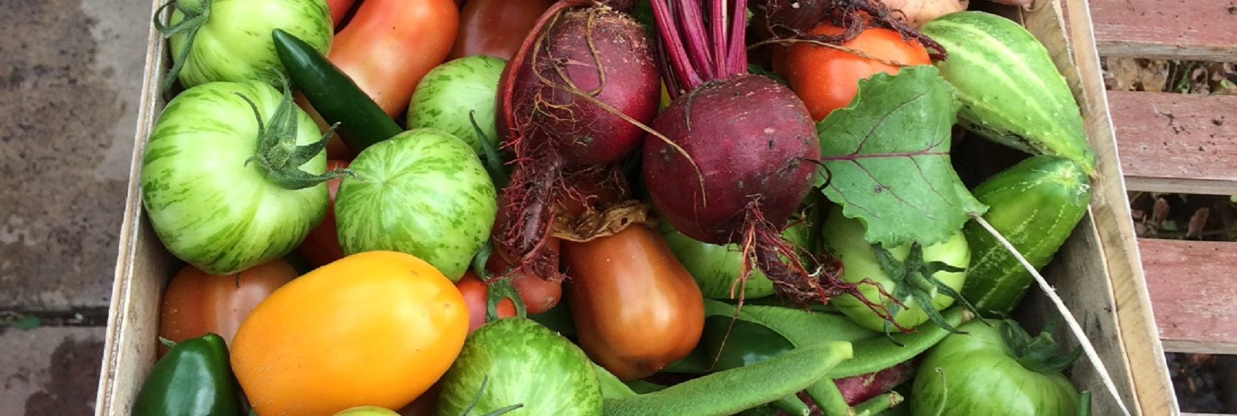 Wooden box full of colourful vegetables like peppers, runner beans and beetroot