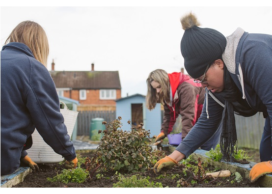 Three people weeding around a raised bed - behind is a shed and the site is close to housing