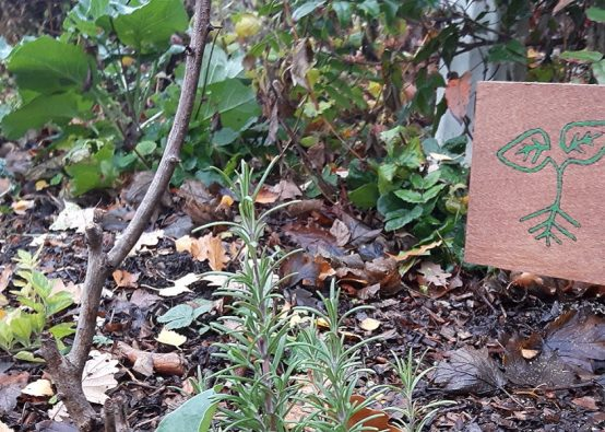 Brown leaf covered growing area with a handmade sign for IE Outwood made by inscribing wood