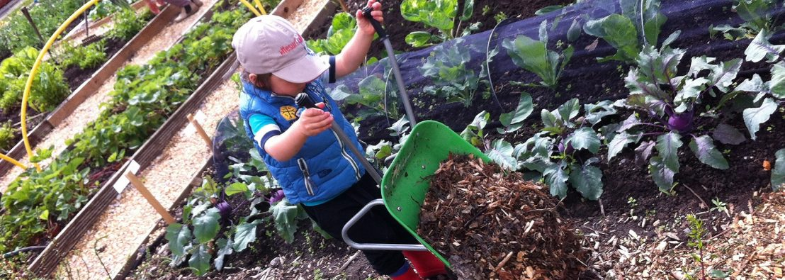 Small child wearing red wellies in an allotment dumping a mini-wheelbarrow full of wood chippings onto a walkway