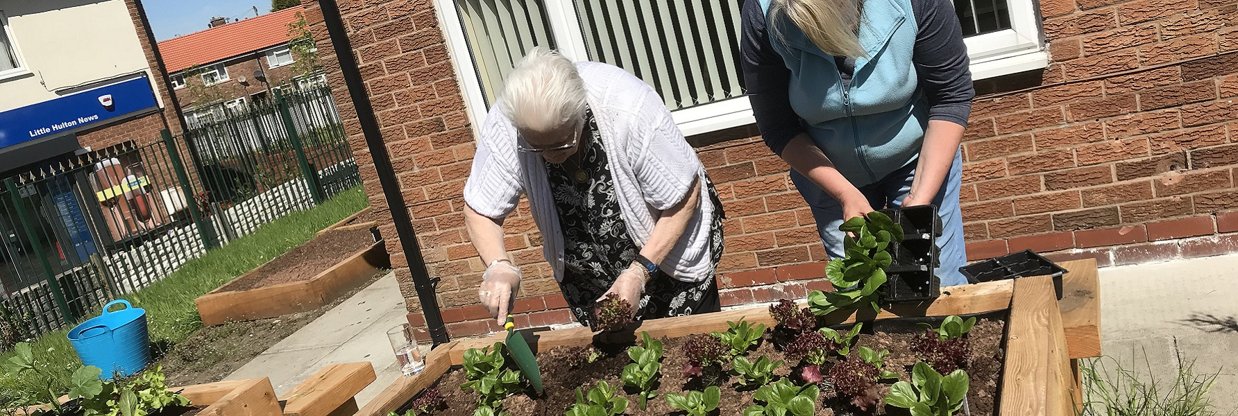 Two women, one older, planting salad leaf plants from seed trays into a raised bed, at a community centre with other raised beds