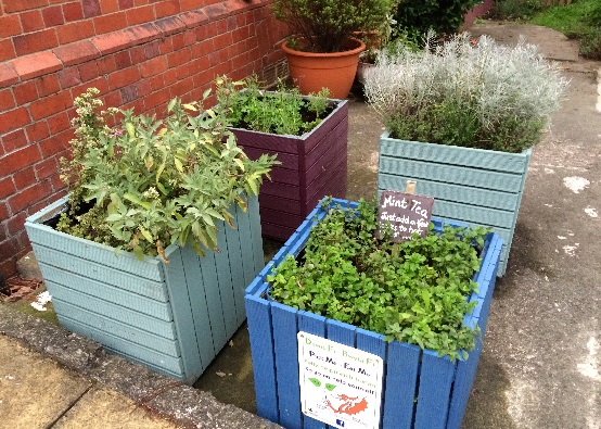 Two square boxes made of old decking, with plants growing in them in a concrete area - one with a sign giving instructions on making mint tea from the mint growing in the planter