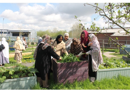 Seven women of south Asian background looking at a planter with comfry in it, on growing site surrounded by industrial looking buildings