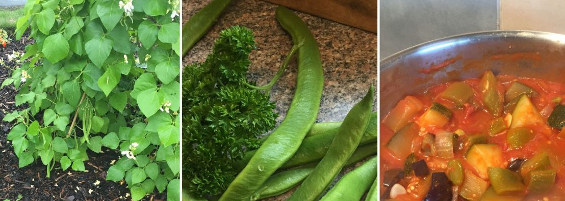 Montage of three photos, with runner beans growing, then picked, then cooking in a pot